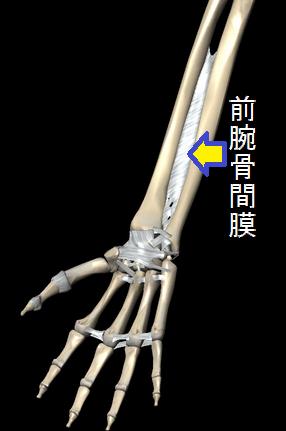 前腕骨間膜.png