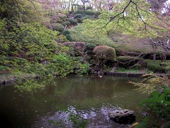 池田山公園池1.JPG