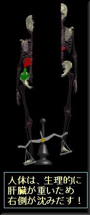 肝臓が重いため右側が沈み出す.jpg