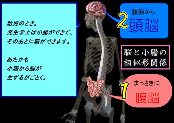 脳と小腸の相似形図.png