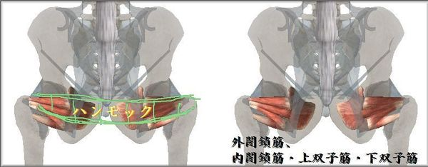 閉鎖筋群と上下双子筋のハンモック図JPEG.jpg