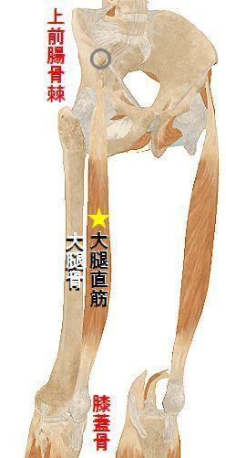 ★大腿直筋.jpg