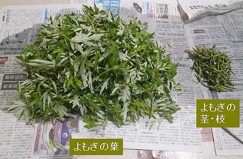 よもぎの葉と茎をわける.png