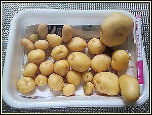 ジャガイモの収穫.jpg