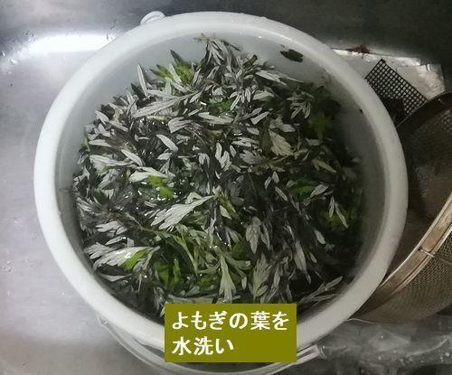 ヨモギの葉を水洗い.jpg