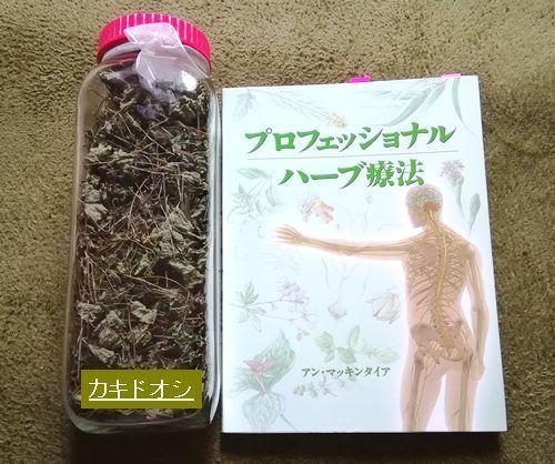 乾燥カキドオシ自宅にて収穫.jpg
