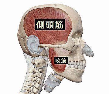 側頭筋と咬筋.jpg