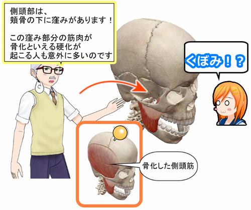 側頭部の頬骨下の窪み.png