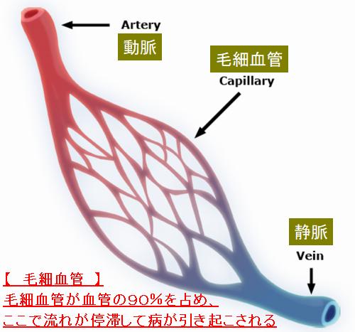 動脈と静脈の間が毛細血管.png