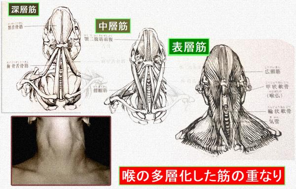 喉の多層化した筋の重なり.png