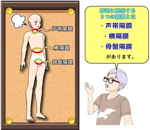 声帯隔膜・横隔膜・骨盤隔膜.png