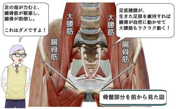 大腰筋と腸骨筋.jpg