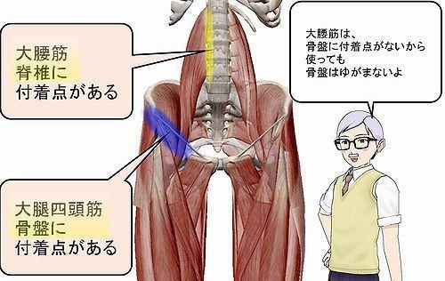 大腰筋大腿四頭筋.jpg