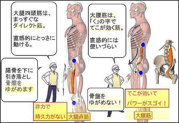 大腿四頭筋と大腰筋のちがい.jpg