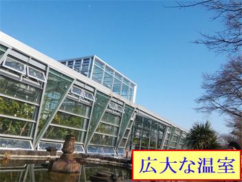 小石川植物園 温室.png