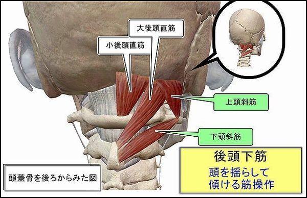 後頭下筋後ろから見た図1.jpg