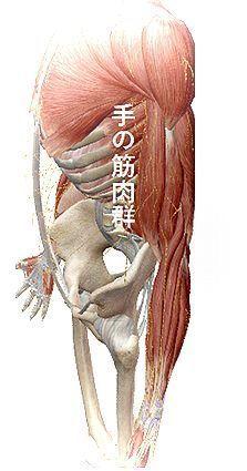 手の筋肉.jpg