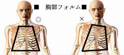 理想姿勢と歪曲姿勢の上半身フォルム1胸郭.jpg