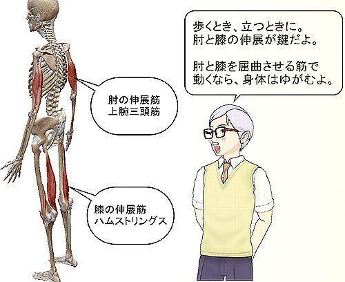 肘と膝の伸展筋が鍵.jpg