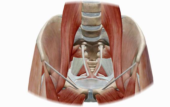 股関節周りの筋肉.png