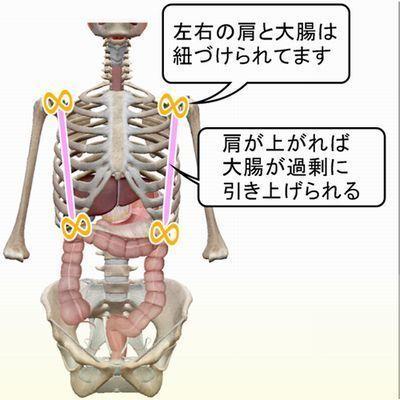 肩が大腸を吊る関係1.jpg