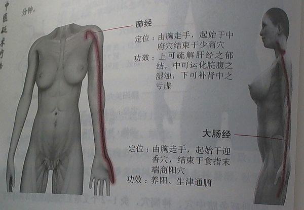 肺経・大腸経.jpg