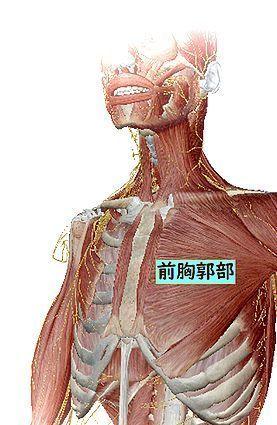 胸部.jpg