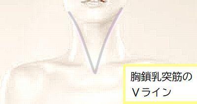 胸鎖乳突筋のVライン.jpg