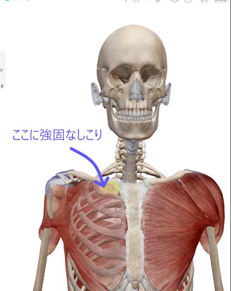 胸鎖関節付近のしこり.png