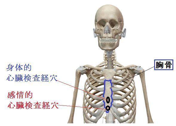 胸骨をチェック.jpg