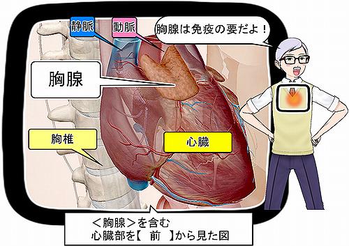 胸骨前から.png