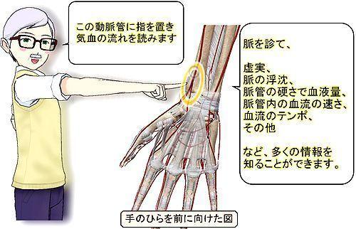 脈診の位置.jpg