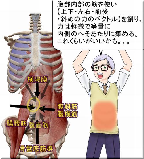 腹圧をつくる多様な力のベクトル.png
