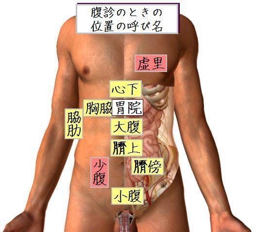腹診のときの位置の呼び名.jpg