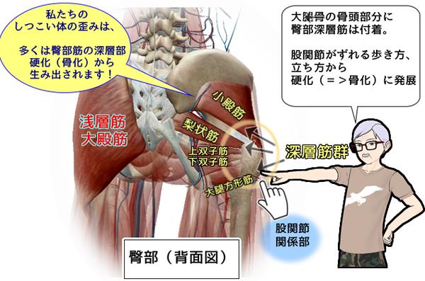 臀部深層筋図.png
