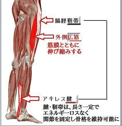 靭帯と腱と筋肉と.jpg