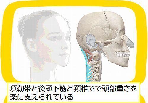 頭と首のポジション良し.jpg