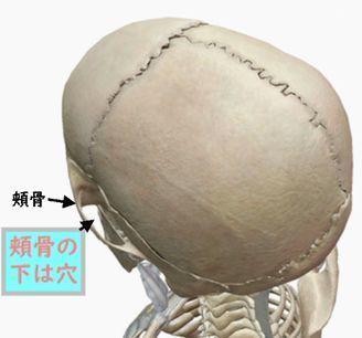 頭蓋骨頬骨の下は穴.jpg
