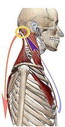頭部を前後の体幹から支えるツール横.jpg