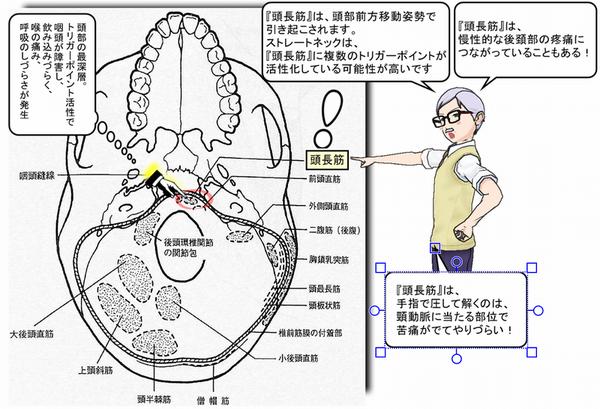 頭長筋が頭部の深層位置にある図.png