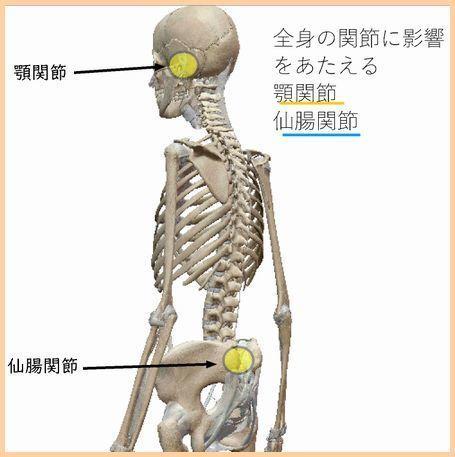 顎関節と仙腸関節.jpg