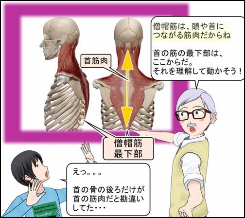 首の筋肉.png