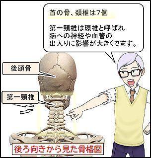 首の骨.jpg