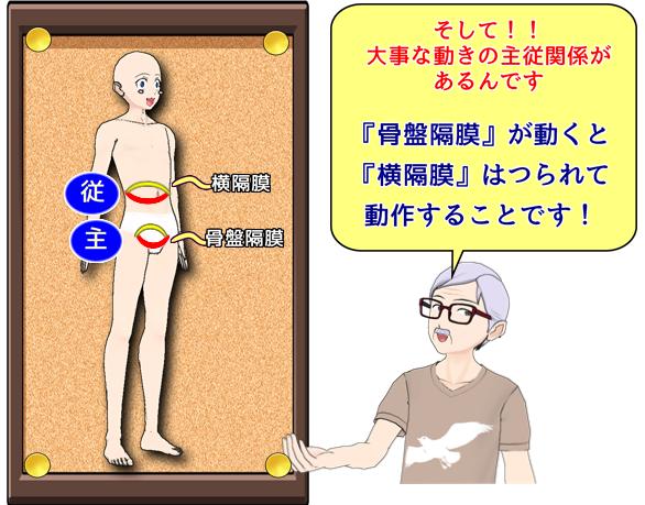 骨盤隔膜と横隔膜との動作の主従関係.png