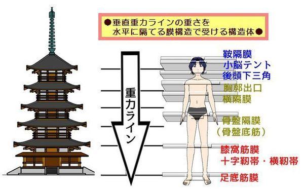 8つの隔膜です.jpg